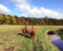 Per og Hanne på ridetur med islandske heste i Eskildstrup