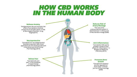 Why choose CBD oil?