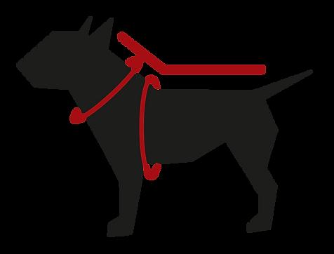 ZAMPE pet apparel
