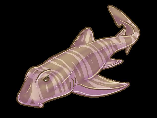 Bullhead Shark