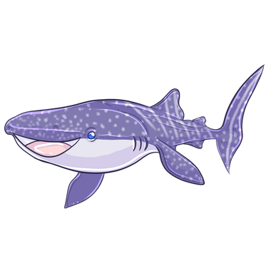 whalesharksquare.png