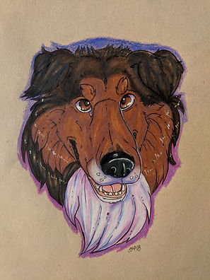 Riley Collie