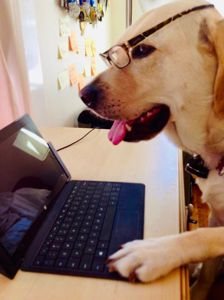PD: Zoe sitting at a desk looking at a laptop. Her paw is on the keyboard, and she is wearing glasses so it looks like she is hard at work!