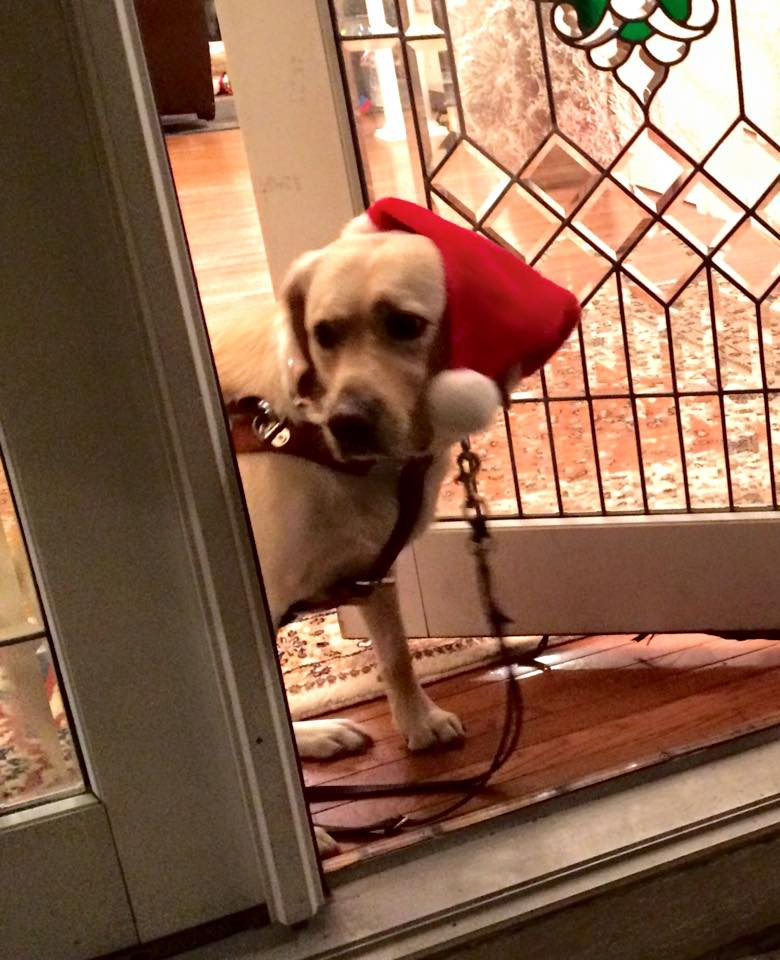 PD: The door to the house is cracked open as Zoe sneaks out the front door. She has her harness and leash on, and a Santa hat.