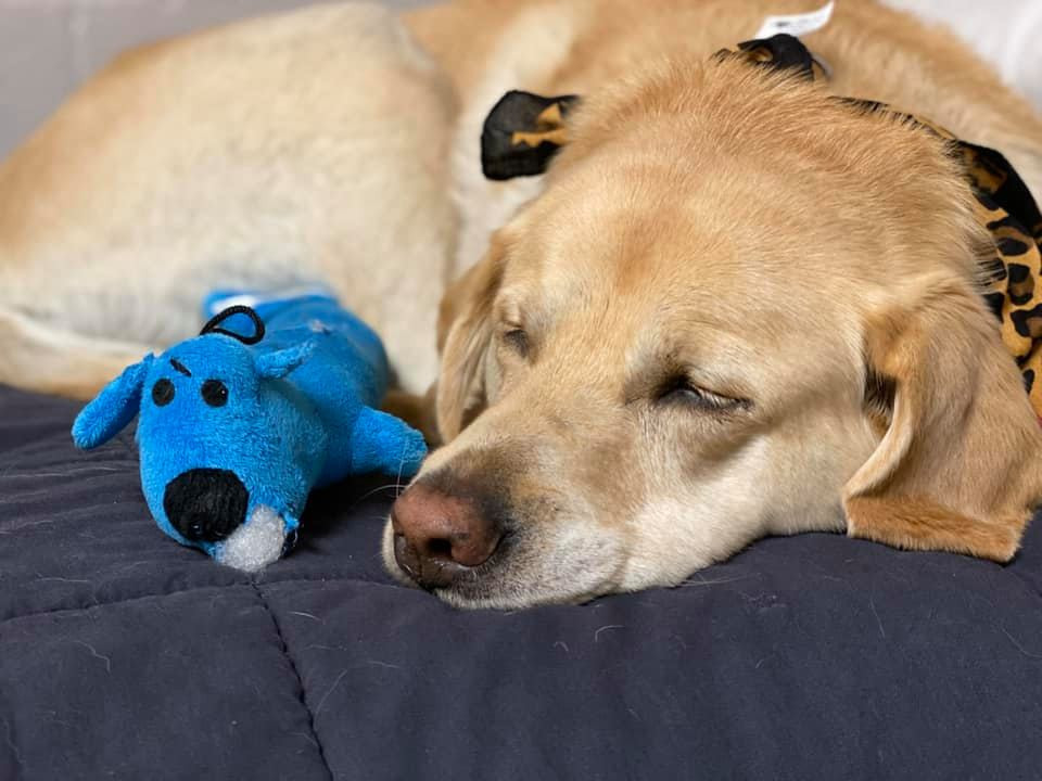 PD: Zoe sleeps next to her blue toy that has stuffing coming out of his head. They both look tuckered out.
