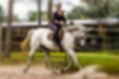 Horse Riding Lessons Tallahassee