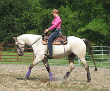 Horse Training Tallahassee