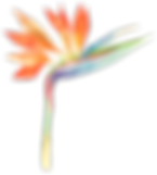 bird of paradise flower.png
