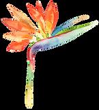 bird of paradise flower.png
