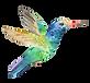 colibri bird.png