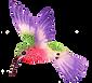 hummingbird3.png