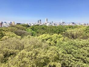 morning yoga@rooftop~自然を体感~のお知らせ