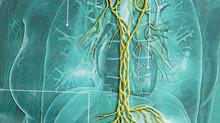 l'importance du nerf vague