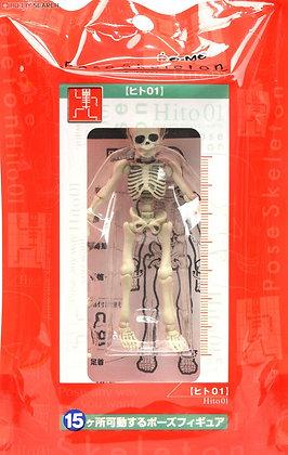 Pose Skeleton Human