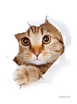 Broccoli Character Sleeve Cat [Call Me?] (Card Sleeve)