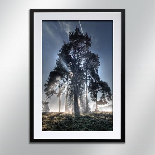 Tatton park back lit trees, Wall Art, Cityscape, Fine Art Photograp