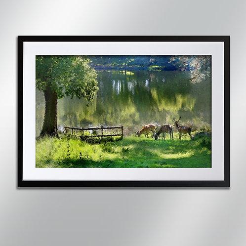 Tatton park deer by water, Wall Art, Cityscape, Fine Art Photograp