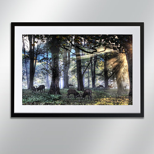 Tatton park deer, Wall Art, Cityscape, Fine Art Photograp