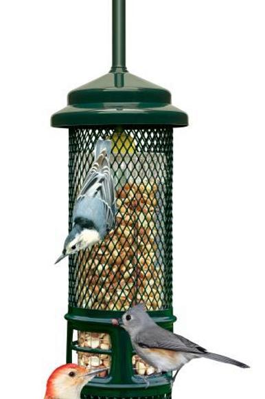 Squirrel Buster Nut Feeder