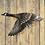 Thumbnail: Western Canada Goose Wall Art