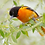 Thumbnail: First Nature - Oriole Feeder