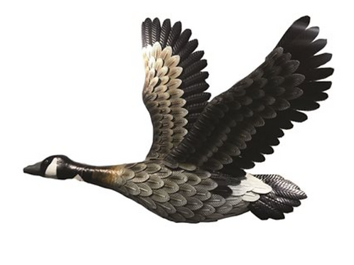 Atlantic Canada Goose Wall Art