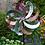 Thumbnail: WindWheel - Madhatter -  Dual-Motion Spinner