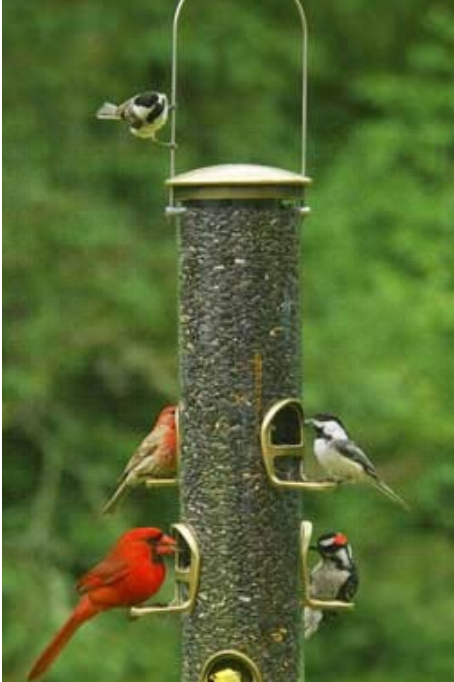 Aspects Big Tube Seed Feeder - Quick Clean