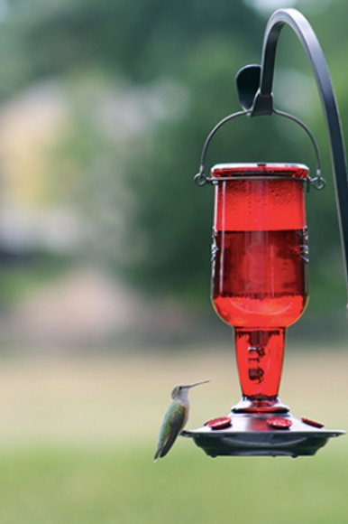 Jug Hummingbird Feeder