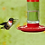 Thumbnail: First Nature - 16 oz Hummingbird Feeder
