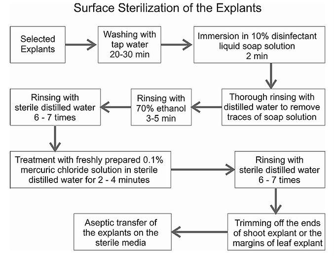 Surface sterilization.jpg