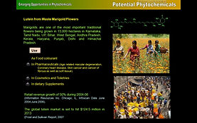 Emerging Opportunities in Phytochemicals