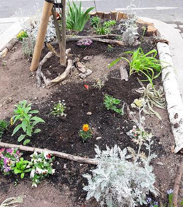 frisch bepflanzte Baumscheibe