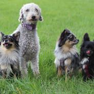 unsere Hundebande