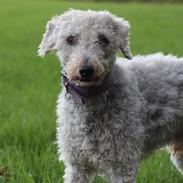 Guinness, mein Therapiehund und Zen-Meister
