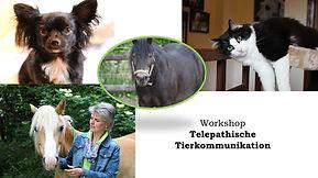 Tierkommunikation-Werbebild.jpg