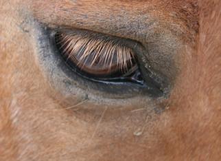 Tiere tragen die Krankheit ihres Menschen