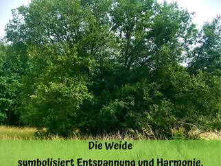 Altes  Baumwissen: Die Weide