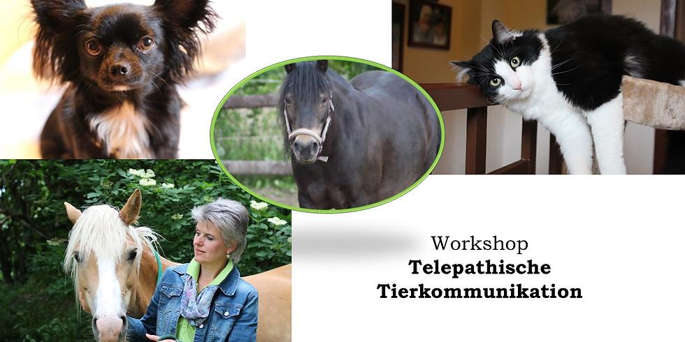 Workshop Telepathische Tierkommunikation