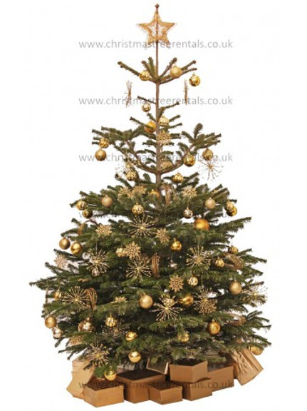 GILT EDGE REAL TREE