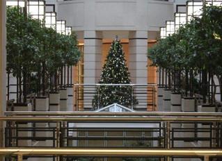 A Beautiful Christmas Tree in Knightsbridge