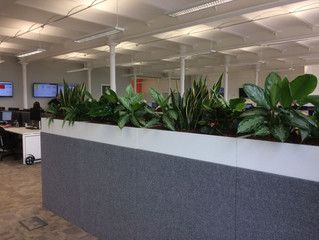 Mixed Leafy Troughs for Tech Consultancy Firm