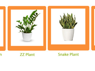 Choosing the Right Plants for Your Office
