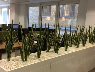 Cabinet Troughs and Freestanding Plants