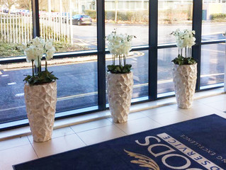 Delicate Orchids in Shell Planters