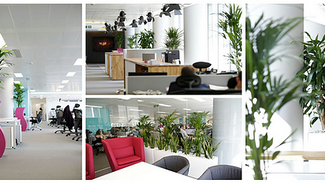 Brief 4: To transform the offices of a leading cinema marketing company, London.