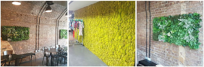 Living Moss Wall Fashion Retail