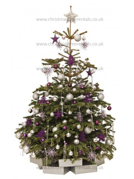 PURPLE LUSTRE REAL TREE