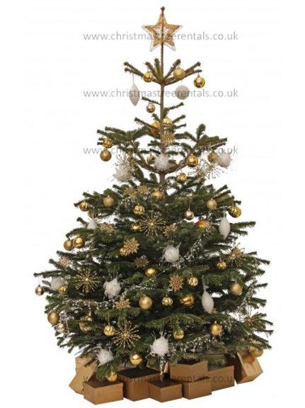 STARBURST REAL TREE