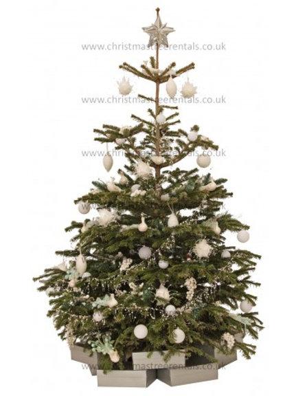 WINTER WHITE REAL TREE